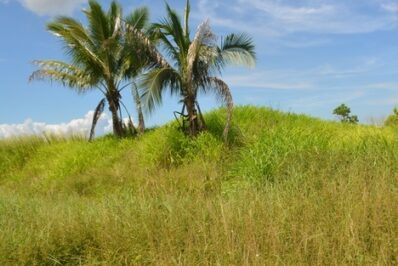 Couva Agricultural Land, 2 Acres1 (1)