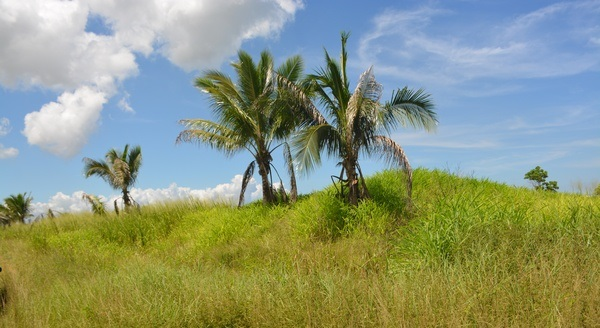 Couva Agricultural Land, 2 Acres1 (2)