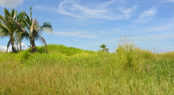 Couva Agricultural Land, 2 Acres3 (2)