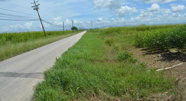 Couva Agricultural Land, 2 Acres6 (1)