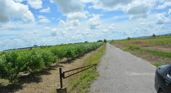 Couva Agricultural Land, 2 Acres6 (2)
